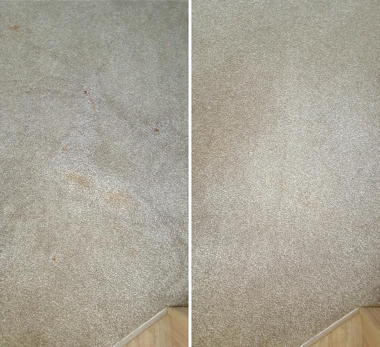 Lounge Carpet - Food Stain Removal